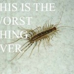 Hate Bugs? Want To Know If They Will Invade Wisconsin This Summer?