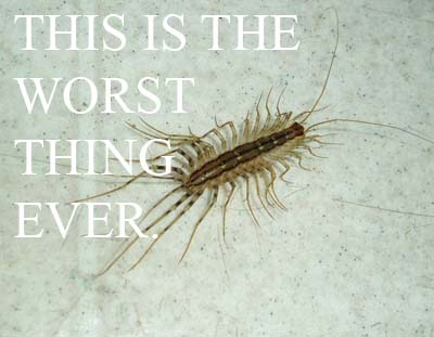 housecentipede2 copy