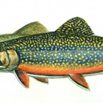 Rising Temperatures In Wisconsin And How They Will Effect Trout Popula...