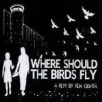 Where Should The Birds Fly