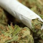 Dane County Expected to Reject Marijuana Raid Money