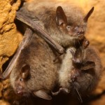 New Study: Wisconsin Bats Are In Danger