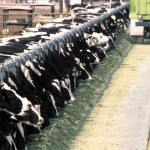 CAFOs in Wisconsin
