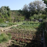 What's growing on at the Goodman Youth Farm?