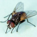 A Billion Flies Can't Be Wrong