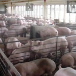 Communities respond to proliferation of CAFOs in Wisconsin