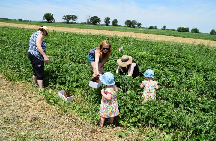 Toddlers in field with family