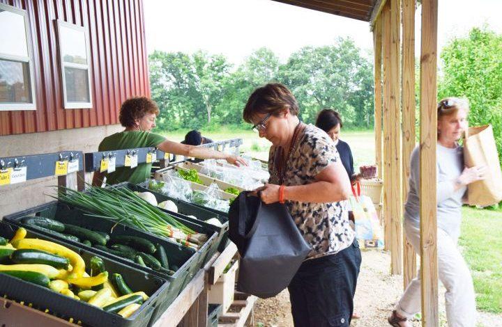 Veggie line and volunteers