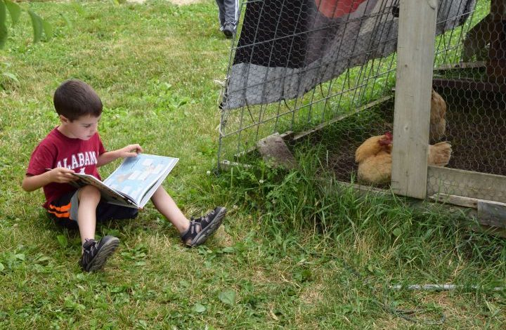 Boy reading to chickens