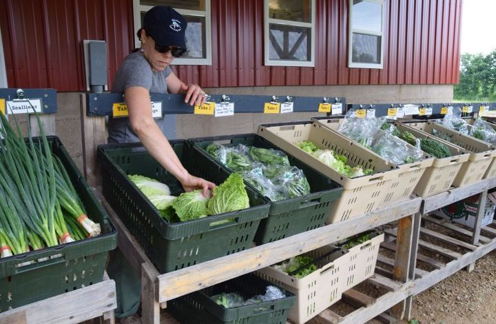 Volunteer refilling produce bin