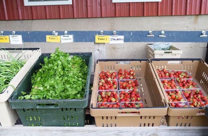 Close up of line veggies