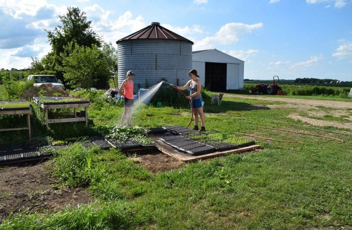Woman watering transplants with a hose