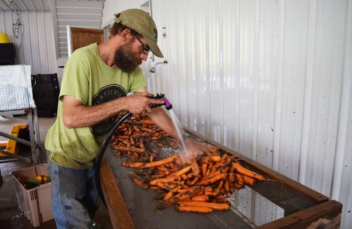 Adam spraying carrots with water to clean them in his packing shed