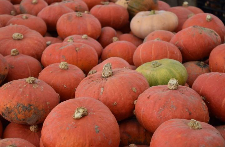Bright orange Kabocha squashes