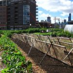 Urban Farming changes lives