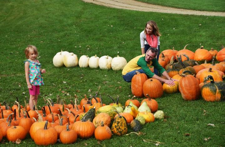 Family looking at pumpkins by the store