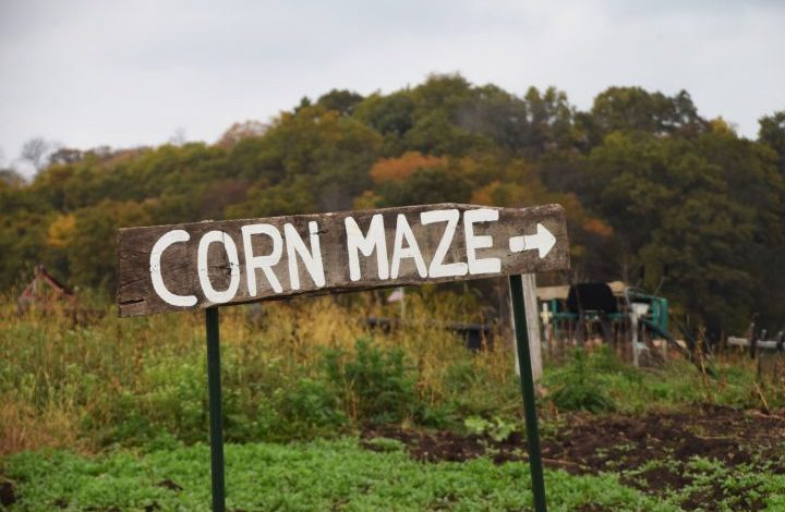 Corn maze sign with arrow