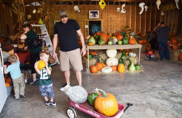 A child loading a small pumpkin in to a wagon inside the store