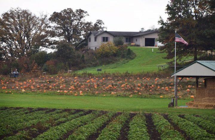 Strawberry plants, pumpkin fields, shed, house