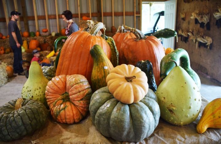 Many different varieties of pumpkins and gourds on top of a table
