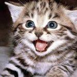 Carpe Kitty