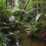 "Ceiba Foundation's ""Funkraiser"" Benefits Tropical Conservation"
