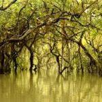 A Quiet Week In Swamp Wobegon
