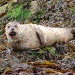 Talking To Seals