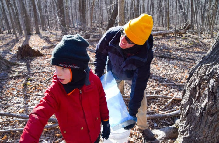 Dad and son emptying sap bags