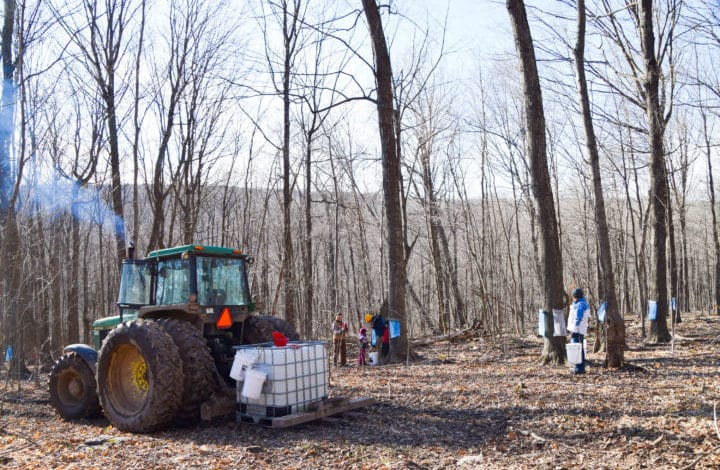 View of people working in the sugar bush