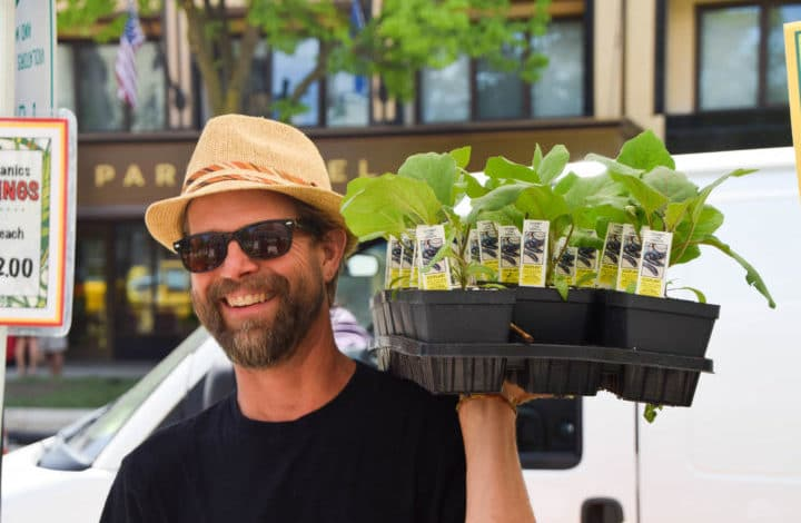 Close up of Voss holding a tray of eggplant seedlings