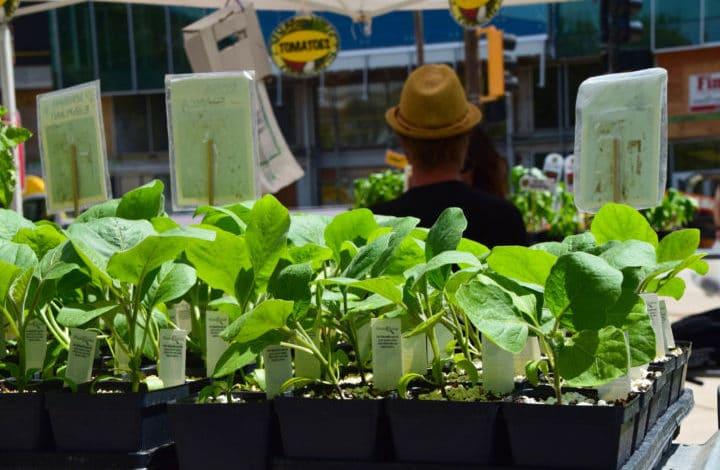 Close up of vegetable seedlings
