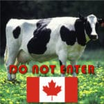 Photo of Holstein Cow and image of Canadian Flag with the words do not enter.