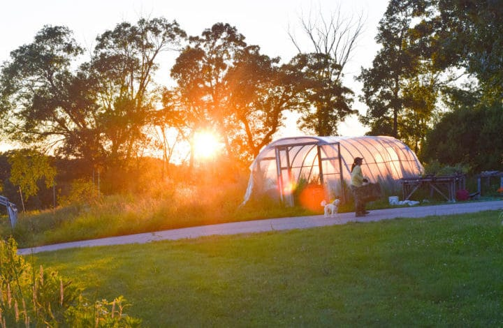 sunset behing hoop house