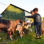Terry Parisi: Gently Touching the Earth at Parisi Family Farm