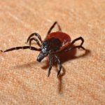 Earthlinks: Ticks 2