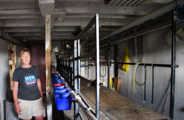 Dela in the goat dairy