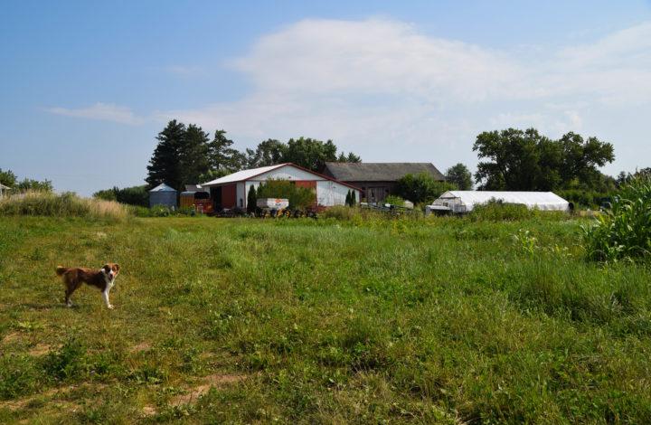 Farm scape view