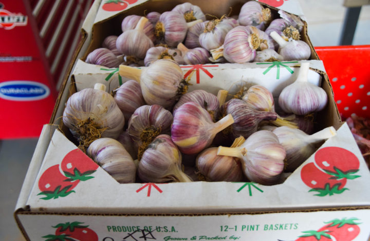 Reddish purple garlic heads in box