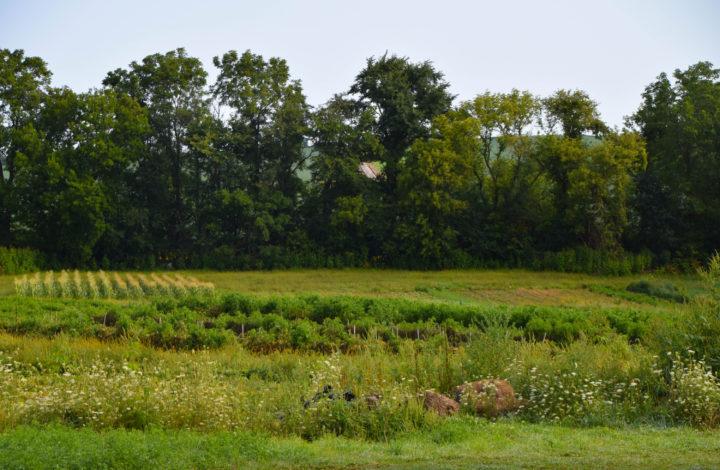 Raleighs-Hillside-Farm-0508