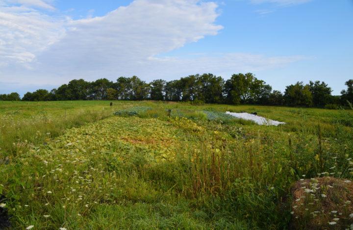 Raleighs-Hillside-Farm-0511