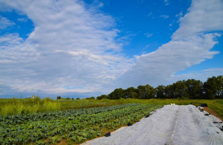 Raleighs-Hillside-Farm-0523