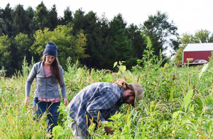 Raleighs-Hillside-Farm-0601