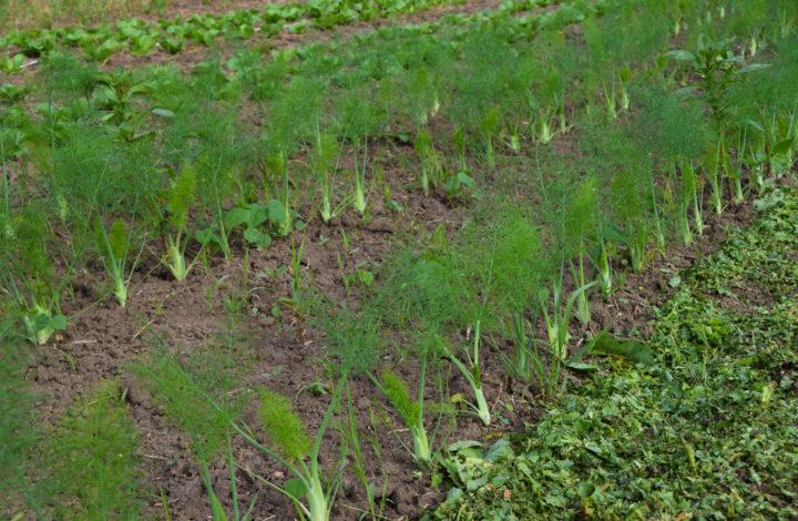 Raleighs-Hillside-Farm-0675