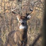 DNR Granted $5 Million for Chronic Wasting Disease Testing Facility