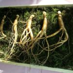 Foxconn, Ginseng Industry To Team Up
