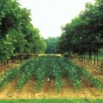 Agroforestry: does it meet the hype?