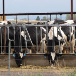 DNR in Final Stages of Permitting Green County CAFO