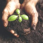 What Makes Soil Healthy