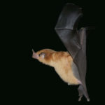 Nectar Bats Fly Nowhere or Nerds Having Fun: Science Trivia, Quizzes and Surprising News Stories